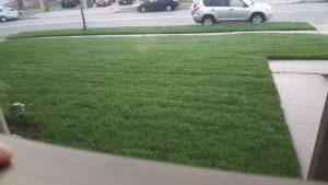 Lawn in Carson, California