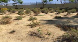 Xeriscaped Area