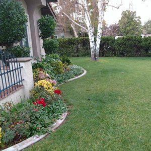 Front Lawn with Elite Plus Fescue
