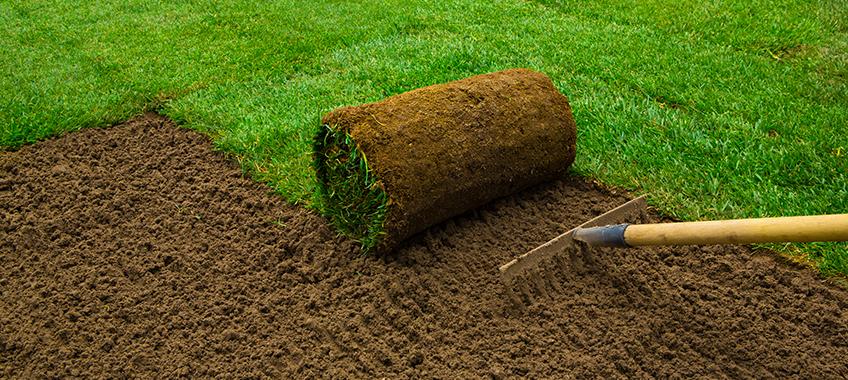 Planting a Lawn