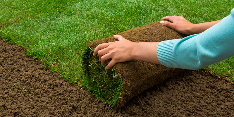 When Is The Best Time To Plant A Yard G Sod Farms