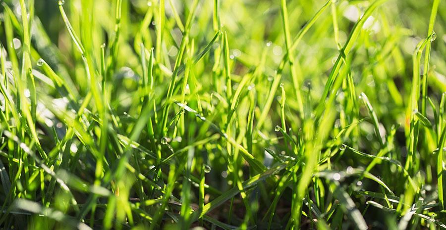 Winter Lawn Care A G Sod Farms
